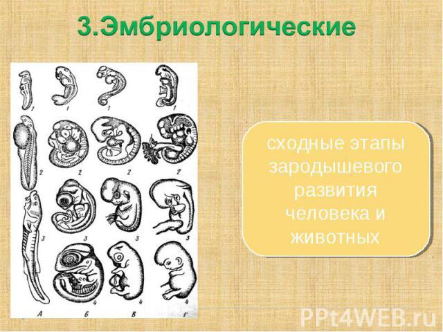 3.Эмбриологическиесходные этапы зародышевого развития человека и животных
