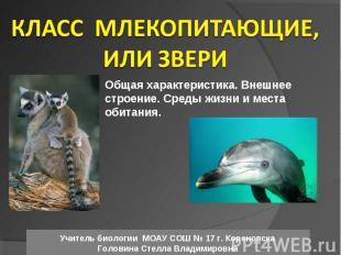 Класс Млекопитающие, или Звери Общая характеристика. Внешнее строение. Среды жиз