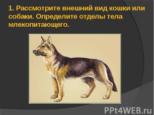 1.Рассмотрите внешний вид кошки или собаки. Определите отделы тела млекопитающе