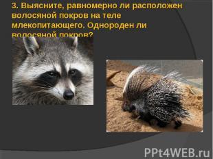3.Выясните, равномерно ли расположен волосяной покров на теле млекопитающего. О
