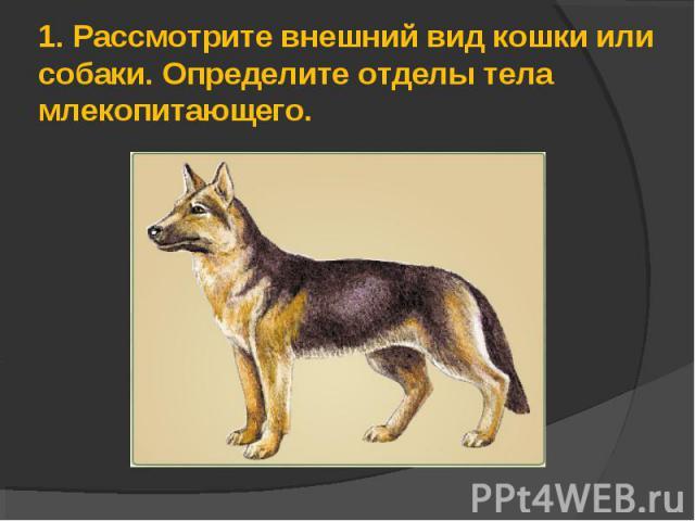 1.Рассмотрите внешний вид кошки или собаки. Определите отделы тела млекопитающего.
