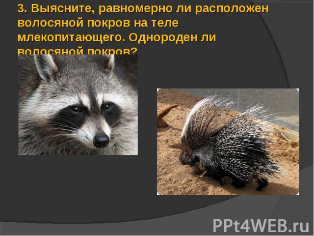 3.Выясните, равномерно ли расположен волосяной покров на теле млекопитающего. Однороден ли волосяной покров?