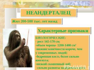 НЕАНДЕРТАЛЕЦ Жил 200-500 тыс. лет назад Характерные признаки БИОЛОГИЧЕСКИЕ:- рос