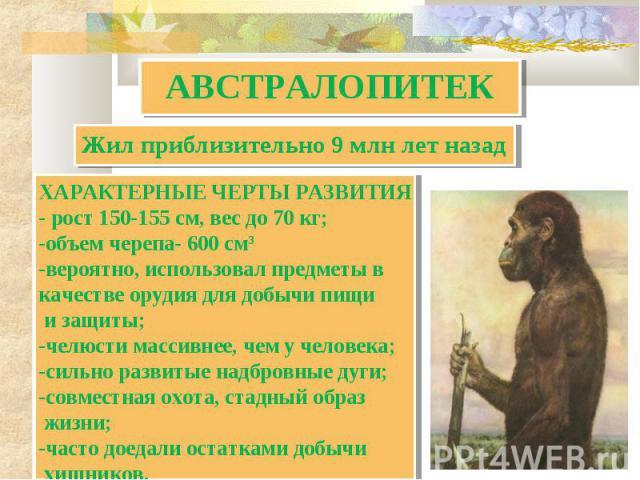 АВСТРАЛОПИТЕК Жил приблизительно 9 млн лет назад ХАРАКТЕРНЫЕ ЧЕРТЫ РАЗВИТИЯ- рост 150-155 см, вес до 70 кг;объем черепа- 600 см3вероятно, использовал предметы вкачестве орудия для добычи пищи и защиты;челюсти массивнее, чем у человека;сильно развиты…