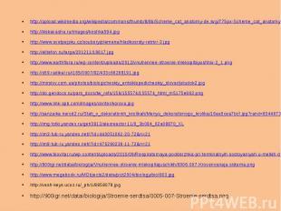 http://upload.wikimedia.org/wikipedia/commons/thumb/8/8b/Scheme_cat_anatomy-de.s