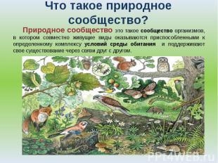 Что такое природное сообщество? Природное сообщество это такое сообщество органи