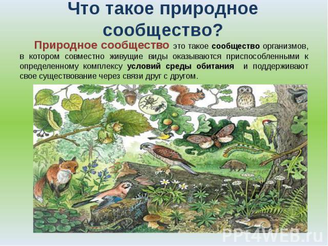 Что такое природное сообщество? Природное сообщество это такое сообщество организмов, в котором совместно живущие виды оказываются приспособленными к определенному комплексу условий среды обитания и поддерживают свое существование через связи друг с…