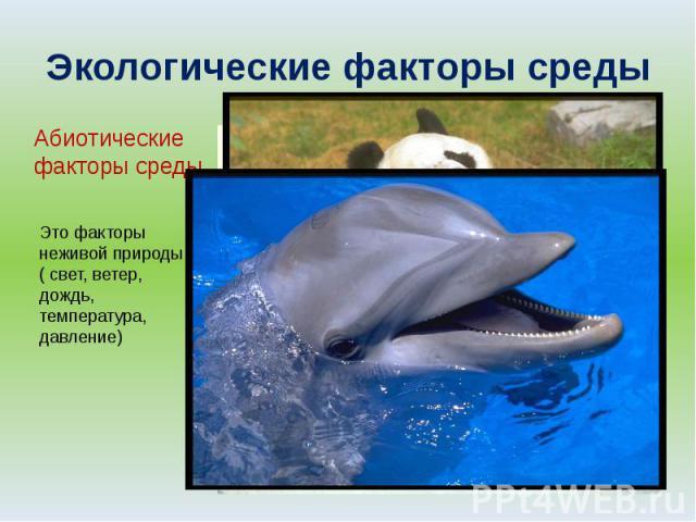 Экологические факторы среды Абиотические факторы среды Это факторы неживой природы( свет, ветер, дождь, температура, давление)