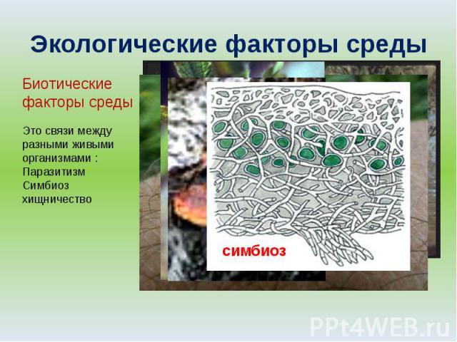Экологические факторы среды Биотические факторы среды Это связи между разными живыми организмами :ПаразитизмСимбиозхищничество