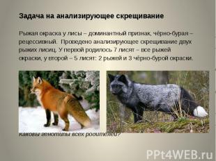 Задача на анализирующее скрещиваниеРыжая окраска у лисы – доминантный признак, ч