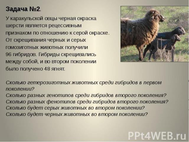 Задача №2.У каракульской овцы черная окраска шерсти является рецессивным признаком по отношению к серой окраске. От скрещивания черных и серых гомозиготных животных получили 96 гибридов. Гибриды скрещивались между собой, и во втором поколении было п…