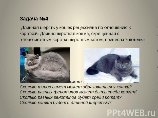 Задача №4. Длинная шерсть у кошек рецессивна по отношению к короткой. Длинношерстная кошка, скрещенная с гетерозиготным короткошерстным котом, принесла 4 котенка.Сколько типов гамет может образоваться у кота?Сколько типов гамет может образоваться у …