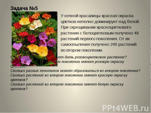 Задача №5 У ночной красавицы красная окраска цветков неполно доминирует над белой. При скрещивании красноцветкового растения с белоцветковым получено 48 растений первого поколения. От их самоопыления получено 240 растений во втором поколении. Скольк…
