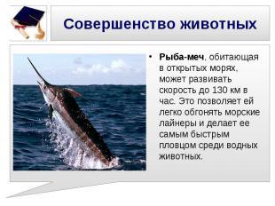 Совершенство животных Рыба-меч, обитающая в открытых морях, может развивать скор