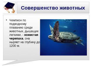 Совершенство животных Чемпион по подводному плаванию среди животных, дышащих лег