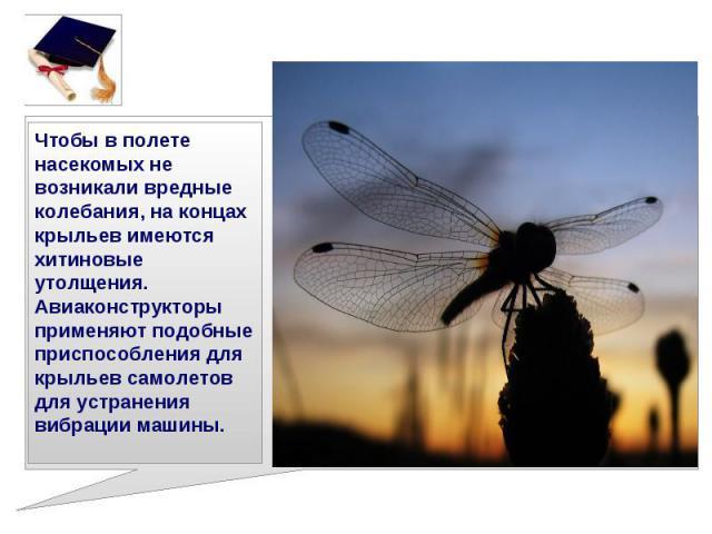 Чтобы в полете насекомых не возникали вредные колебания, на концах крыльев имеются хитиновые утолщения.Авиаконструкторы применяют подобные приспособления для крыльев самолетов для устранения вибрации машины.