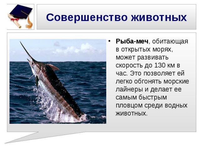 Совершенство животных Рыба-меч, обитающая в открытых морях, может развивать скорость до 130 км в час. Это позволяет ей легко обгонять морские лайнеры и делает ее самым быстрым пловцом среди водных животных.