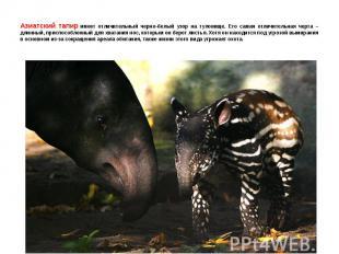 Азиатский тапир имеет отличительный черно-белый узор на туловище. Его самая отли