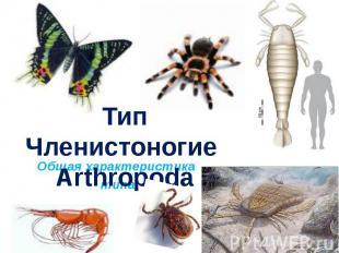 Тип Членистоногие Arthropoda. Общая характеристика типа