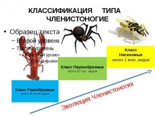 КЛАССИФИКАЦИЯ ТИПА ЧЛЕНИСТОНОГИЕ Класс Ракообразныеоколо 35 тысяч видов Класс Па