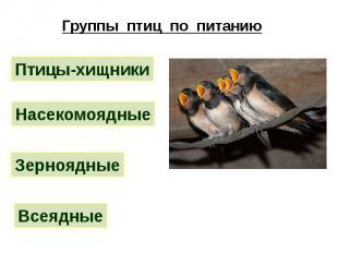 Группы птиц по питанию