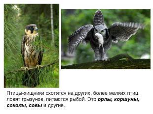 Птицы-хищники охотятся на других, более мелких птиц, ловят грызунов, питаются ры