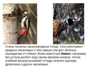 Очень полезны насекомоядные птицы. Они уничтожают вредных насекомых и тем самым