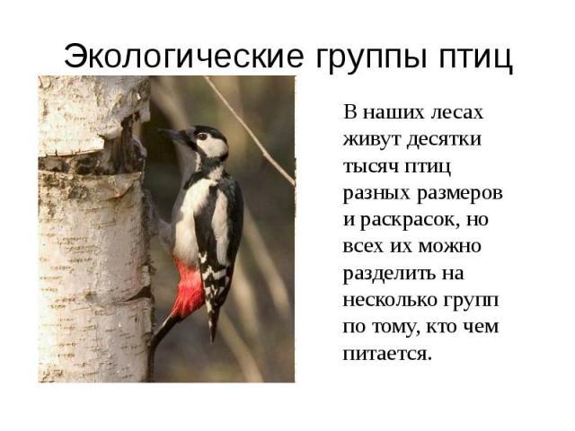 Экологические группы птиц В наших лесах живут десятки тысяч птиц разных размеров и раскрасок, но всех их можно разделить на несколько групп по тому, кто чем питается.