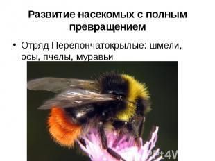 Развитие насекомых с полным превращениемОтряд Перепончатокрылые: шмели, осы, пче