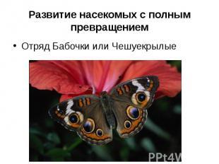 Развитие насекомых с полным превращениемОтряд Бабочки или Чешуекрылые