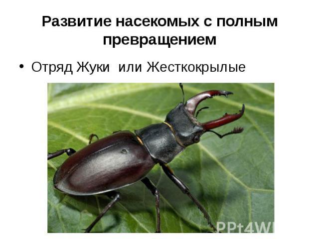 Развитие насекомых с полным превращениемОтряд Жуки или Жесткокрылые