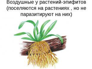 Воздушные у растений-эпифитов (поселяются на растениях , но не паразитируют на н