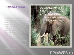 Африканский слон Старые особи африканского слона достигают массы 7,5 тонн, а их