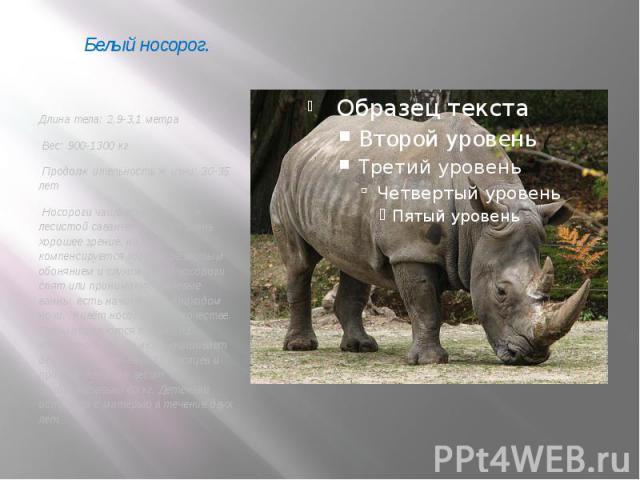 Длина тела: 2,9-3,1 метра Вес: 900-1300 кг Продолжительность жизни: 30-35 лет Носороги чаще всего живут в лесистой саванне. У них не очень хорошее зрение, но оно компенсируется хорошо развитым обонянием и слухом. Днем носороги спят или принимают гря…