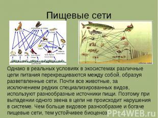 Пищевые сети Однако в реальных условиях в экосистемах различные цепи питания пер