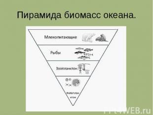 Пирамида биомасс океана.