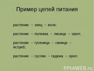 Пример цепей питания растение → заяц → волк; растение → полевка → лисица → орел;