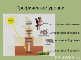 Трофические уровни 4 трофический уровень 3 трофический уровень 2 трофический уро
