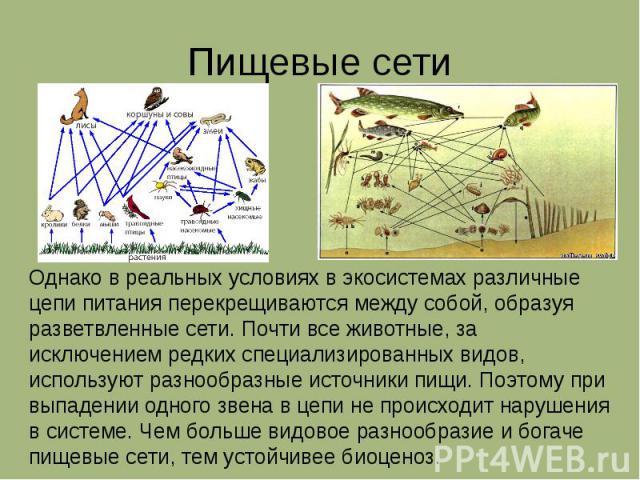 Пищевые сети Однако в реальных условиях в экосистемах различные цепи питания перекрещиваются между собой, образуя разветвленные сети. Почти все животные, за исключением редких специализированных видов, используют разнообразные источники пищи. Поэтом…