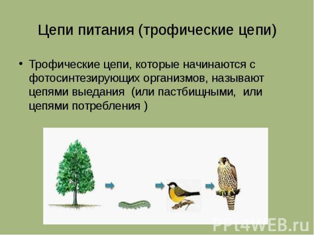 Цепи питания (трофические цепи) Трофические цепи, которые начинаются с фотосинтезирующих организмов, называют цепями выедания (или пастбищными, или цепями потребления )