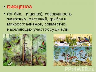 БИОЦЕНОЗ (от био... и ценоз), совокупность животных, растений, грибов и микроорг
