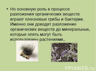Но основную роль в процессе разложения органических веществ играют плесневые гри