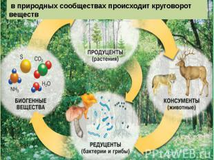 в природных сообществах происходит круговорот веществ