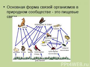 Основная форма связей организмов в природном сообществе - это пищевые связи..