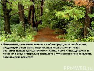 Начальным, основным звеном в любом природном сообществе, создающим в нем запас э