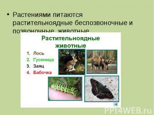 Растениями питаются растительноядные беспозвоночные и позвоночные животные
