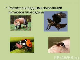 Растительноядными животными питаются плотоядные.