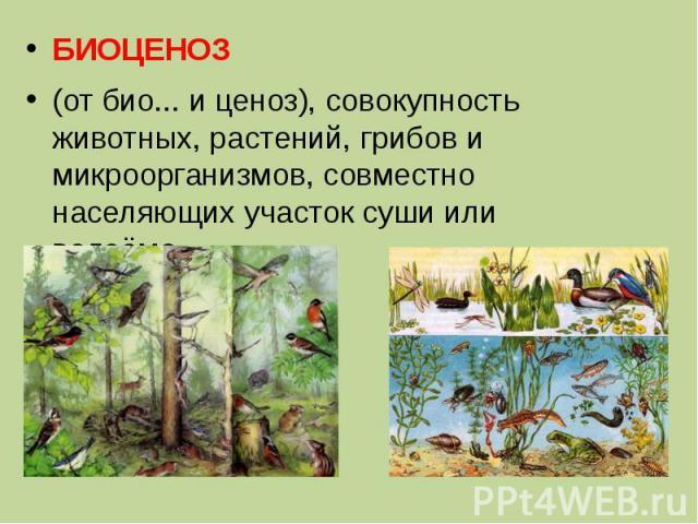 БИОЦЕНОЗ (от био... и ценоз), совокупность животных, растений, грибов и микроорганизмов, совместно населяющих участок суши или водоёма.