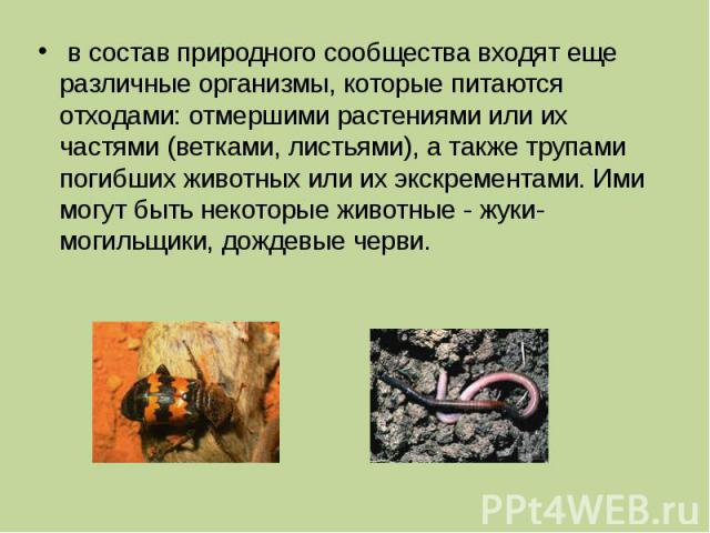 в состав природного сообщества входят еще различные организмы, которые питаются отходами: отмершими растениями или их частями (ветками, листьями), а также трупами погибших животных или их экскрементами. Ими могут быть некоторые животные - жуки-могил…