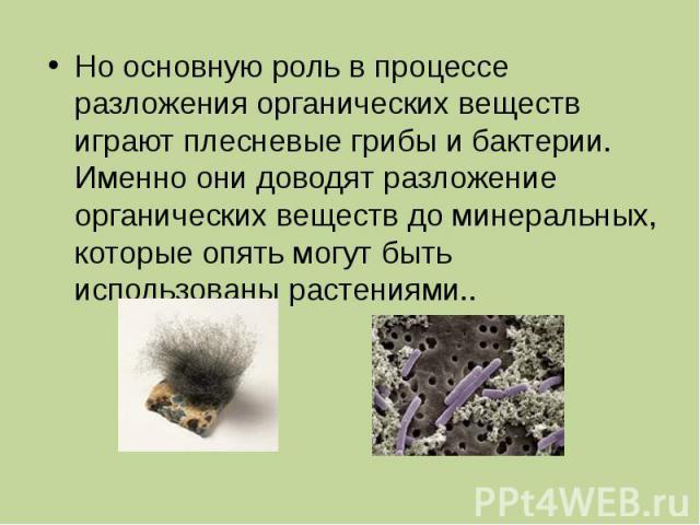 Но основную роль в процессе разложения органических веществ играют плесневые грибы и бактерии. Именно они доводят разложение органических веществ до минеральных, которые опять могут быть использованы растениями..